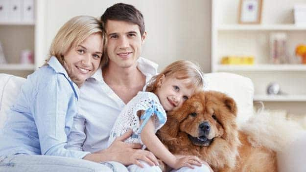 Wills & Trusts dog-young-family Direct Wills Tolworth